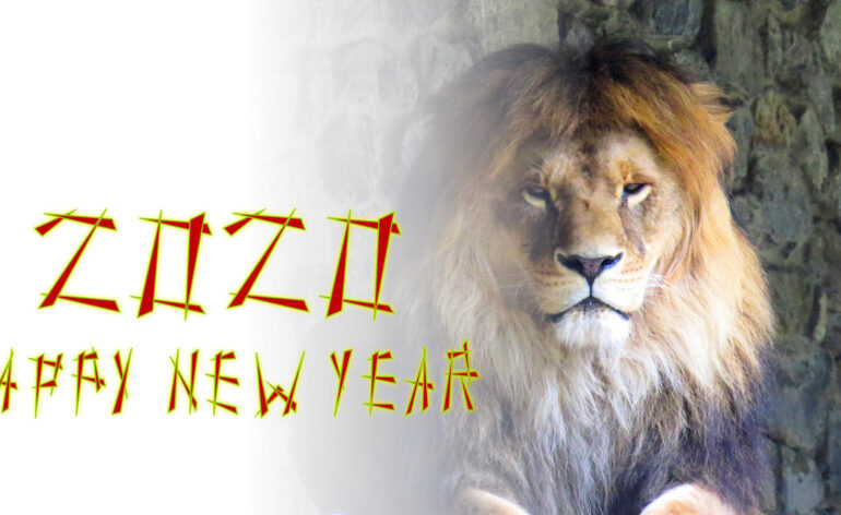 Happy New Year 2020 Lion mane